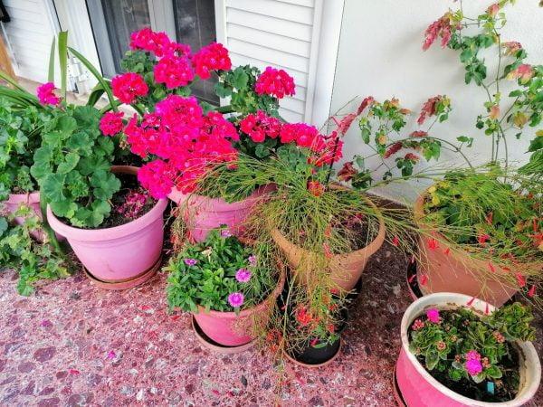 αυλή με λουλούδια